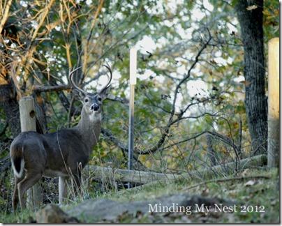 deer 2web2