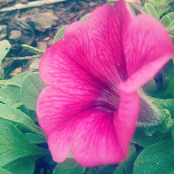 Friday Morning Flower Show