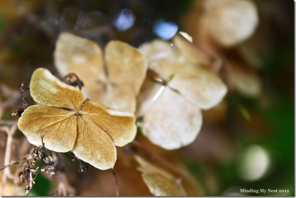 2012-09-23_3845web
