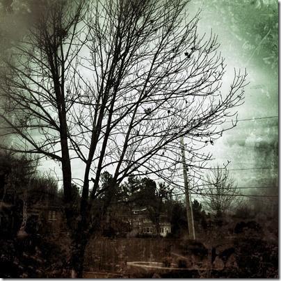 gray and rainy