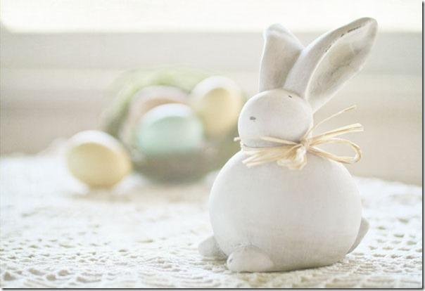 bunny 1web