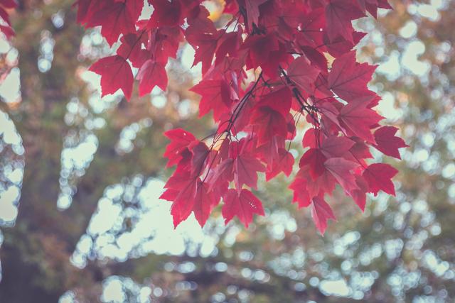IMG_5436_blog