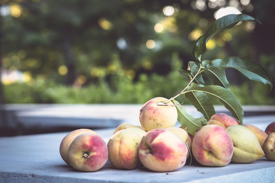 peach season has finally arrived!