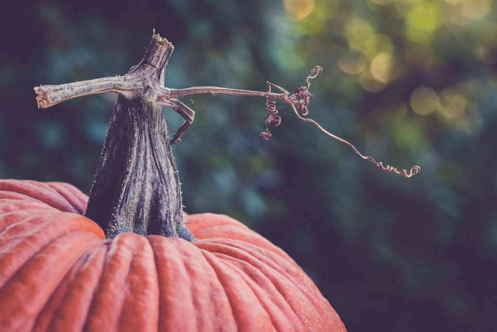 it's all about the pumpkin stems
