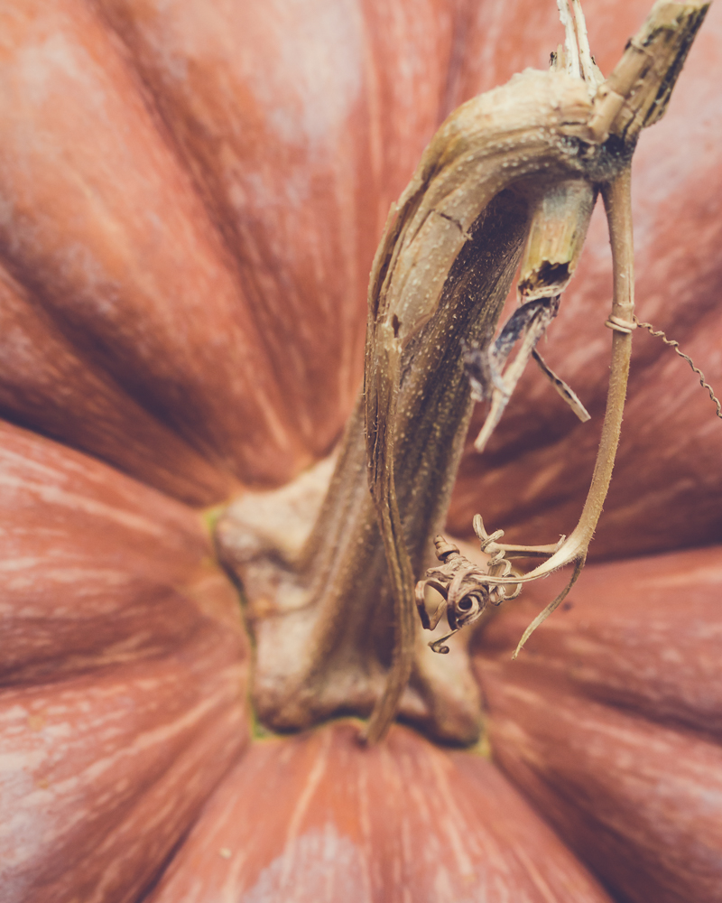 it's all about the pumpkin stem