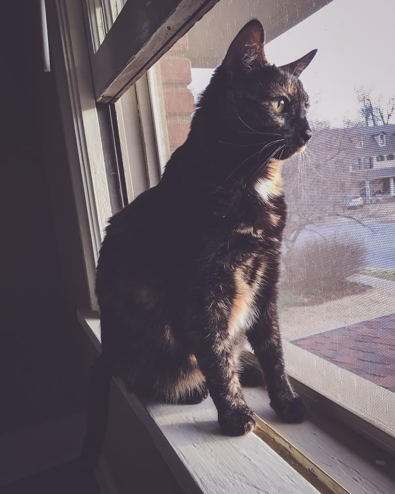 Adventures In Cat-Sitting