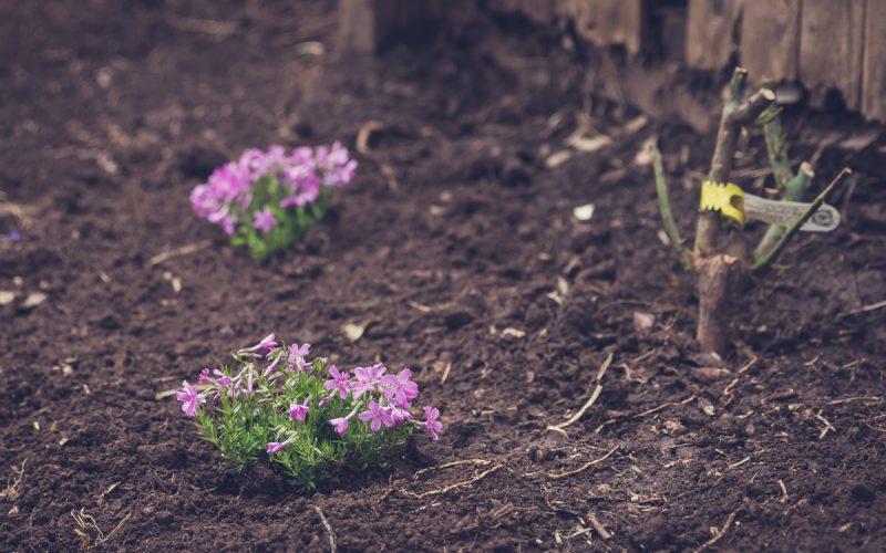 My Spring Garden Report