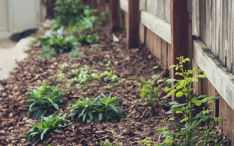 Happiness is…My New Cutting Garden