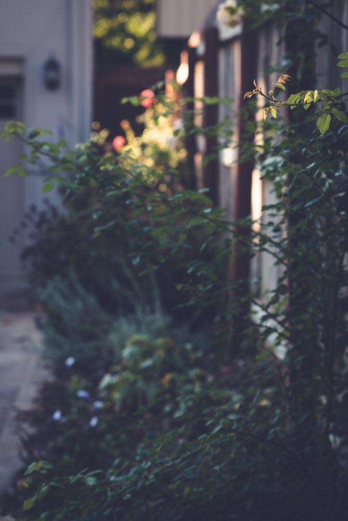 Fall Garden Report