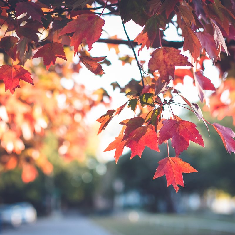 The Ten Best Things About This October