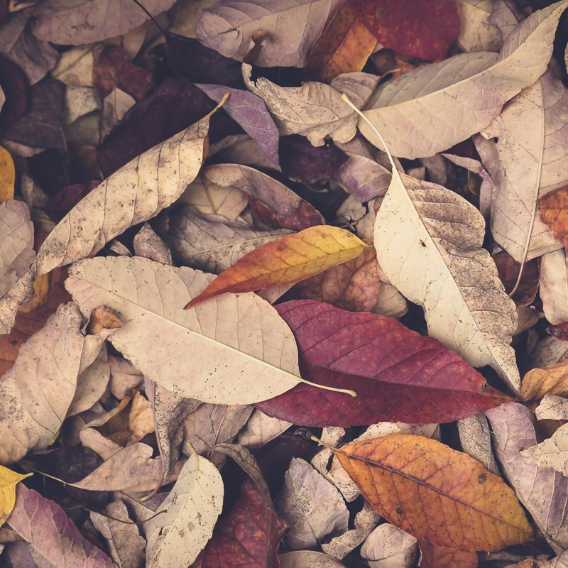 Seasons of Change and Letting Go