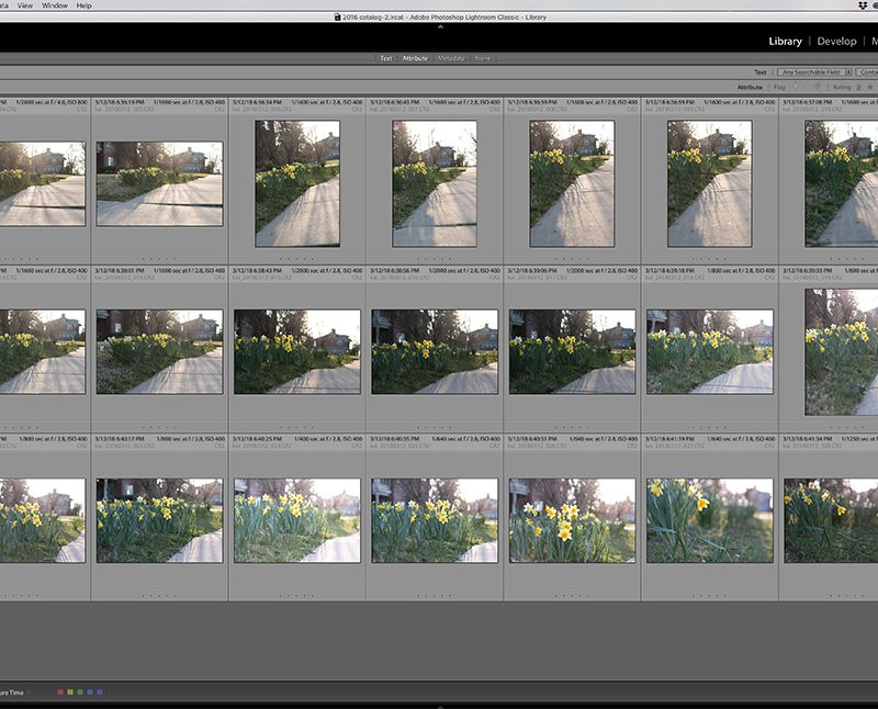 Making the Cut::Tips for Culling and Selecting Photos in Lightroom
