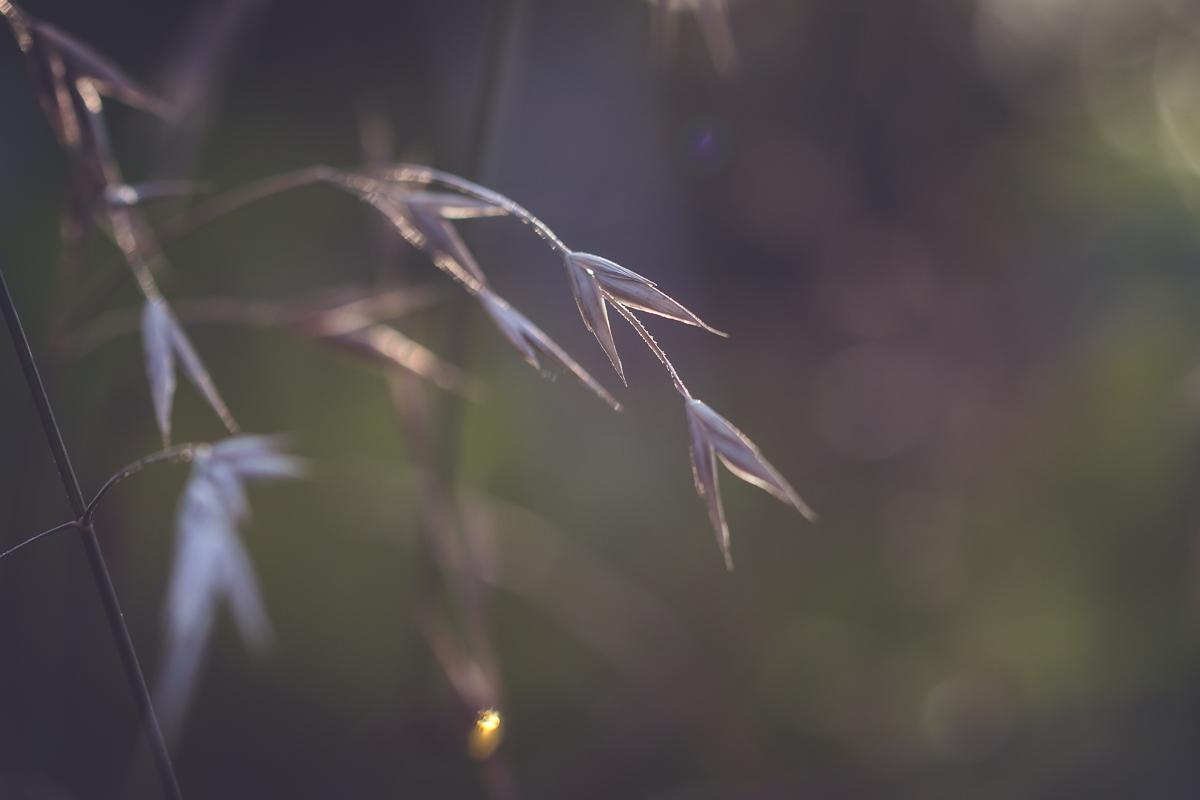 Summer Magic::Golden Hour