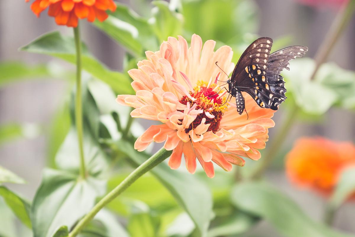 Summer Magic::Flying Flowers