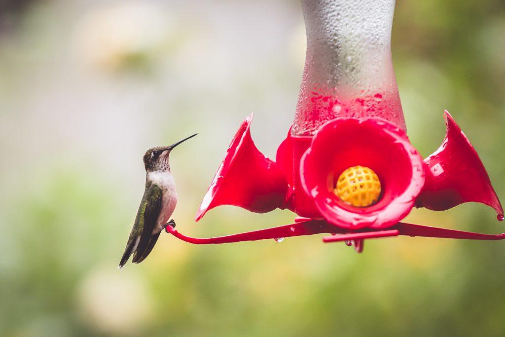 Summer Magic::Hummingbirds