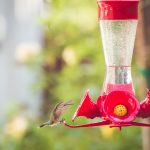 Summer Magic::Hummingbirds