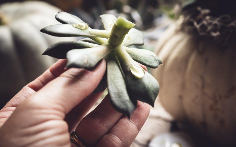 Succulent & Pumpkin Planter