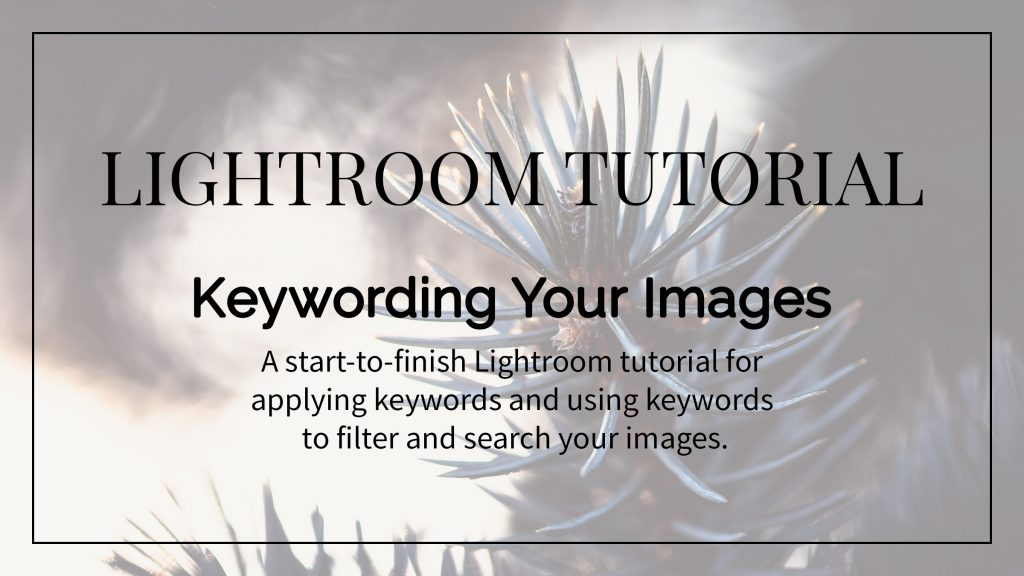 Using Keywords in Lightroom