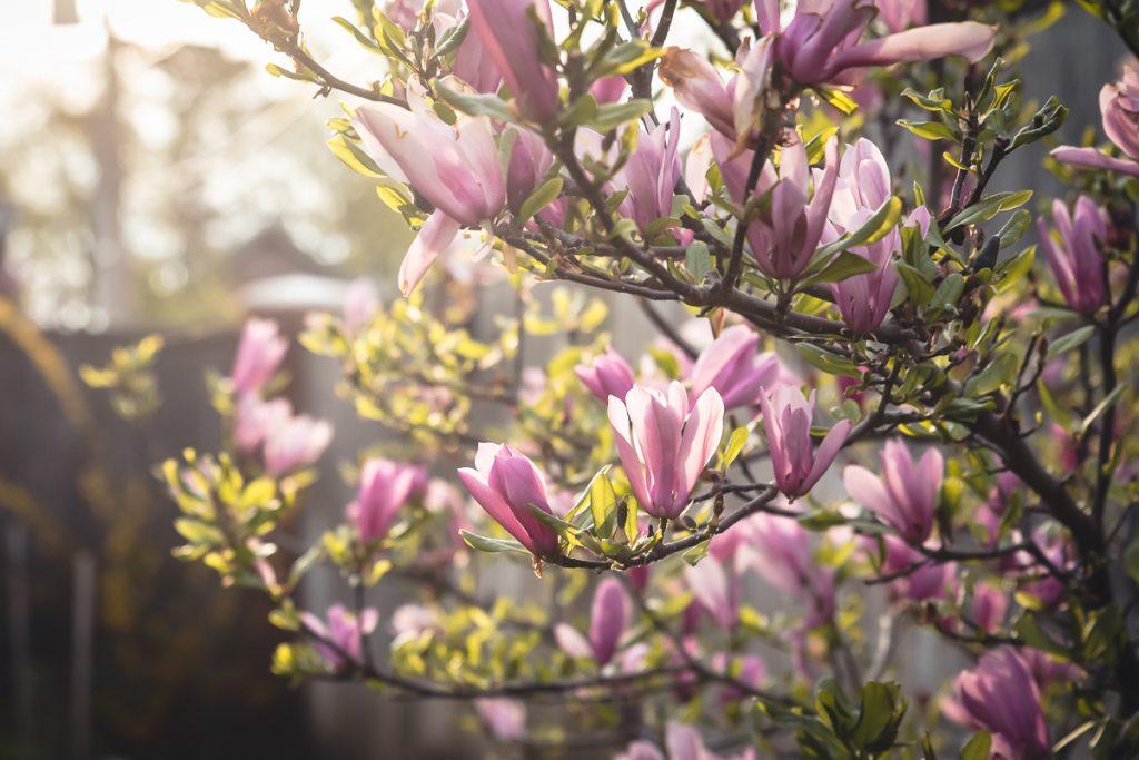 April Garden Report