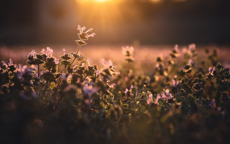 Wildflower Super Bloom, Oklahoma Style
