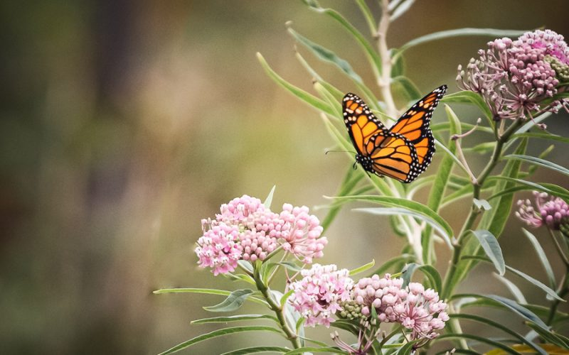 The Simple Gift of the Butterfly
