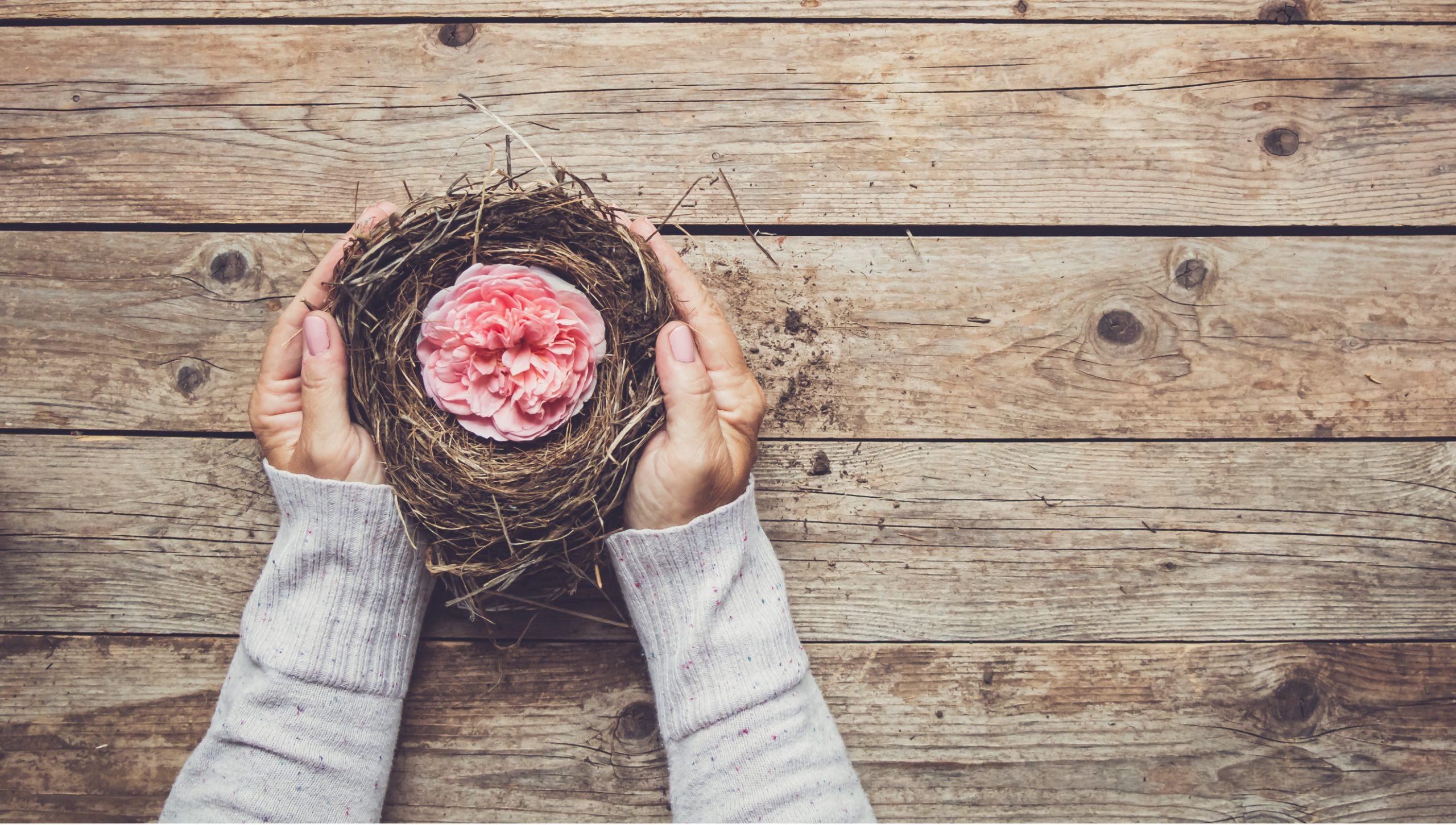 Empty Nest + New Stories