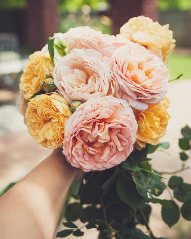 Gardening, Grace and Gratitude
